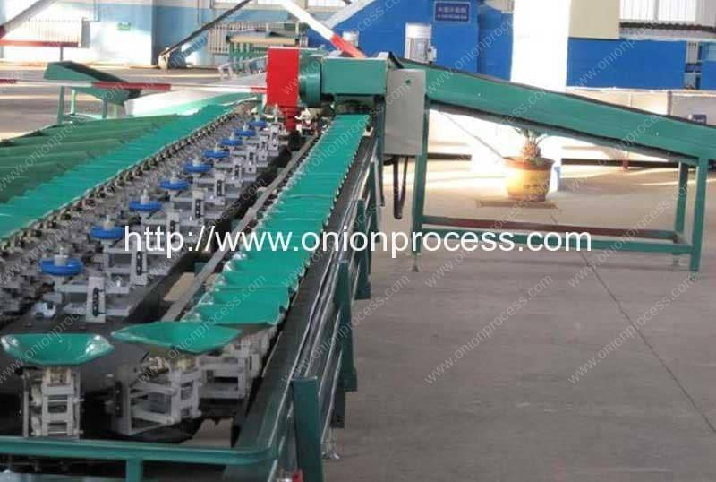 Full Automatic Onion Weight Grader Machine