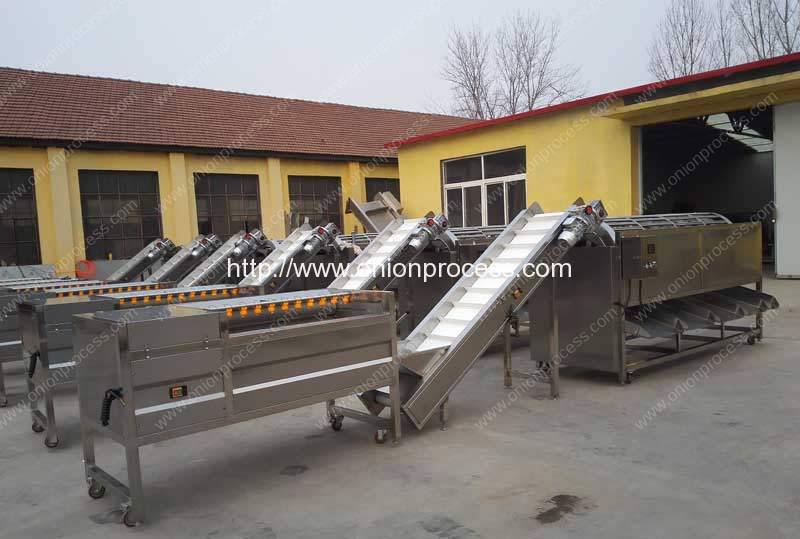 Automatic Onion Water Washing and Grader Line