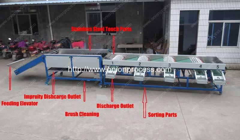 Automatic Onion Selecting Cleaning and Sorting Machine