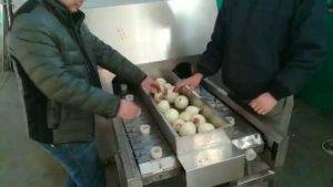 Double-Belt-3ton-Per-Hour-Onion-Root-Cutting-Machine
