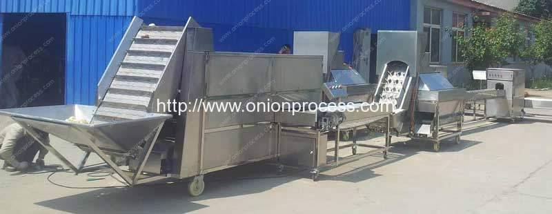 Automatic Onion Sorting Peeling and Root Cutting Line