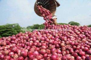 Egypt-onion-production