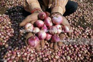 Onion and Garlic Processing in India Market