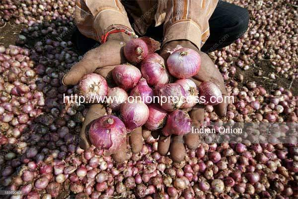 Indian-Onion-Processing-in-India