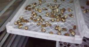 Natural-Gas-Fired-Batch-Type-Dryer-Oven