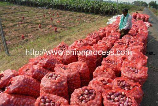 Pakistan-Onion-Processing-Market-Introduction