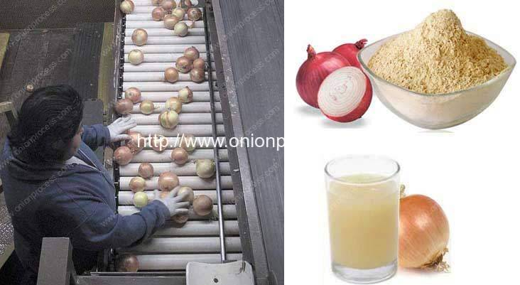 onion-processing-line-in-Mexico
