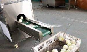 Automatic-Onion-Root-Cutting-Machine-For-Canada-Customer