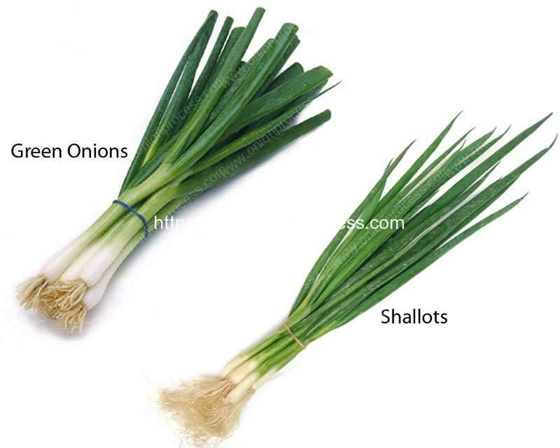 Difference-of-Green-Onions-and-Shallots