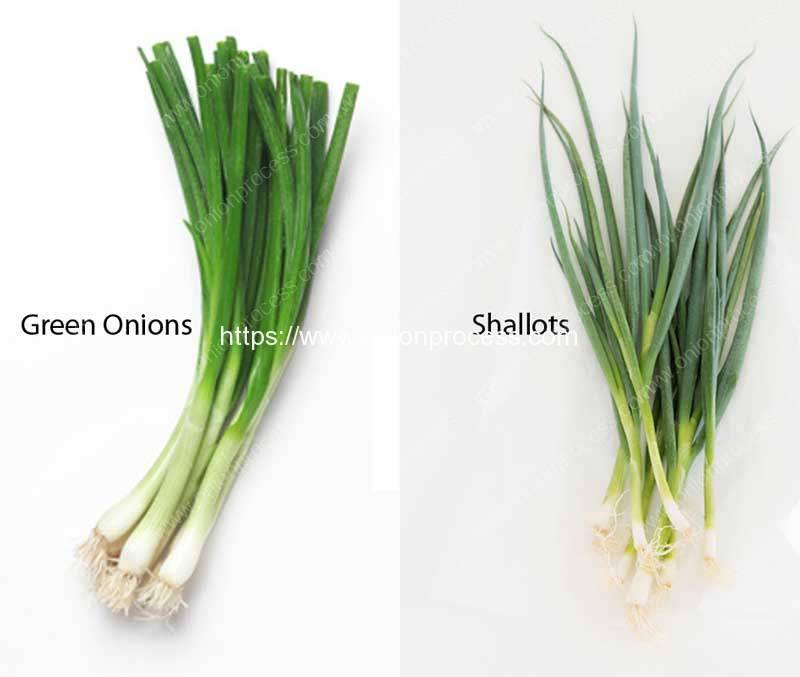 What-are-Difference-of-Green-Onions-and-Shallots