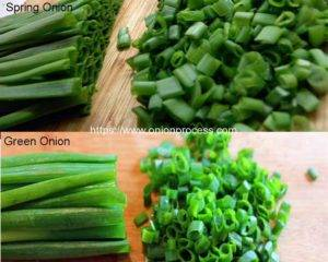 What-are-Difference-of-Spring-Onion-and-Green-Onion