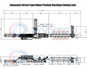 Brush Type Onion Peeling Washing Cutting Line