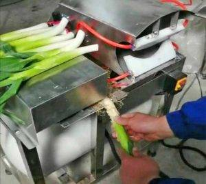 Onion-Spring-Root-Cutting-Machine