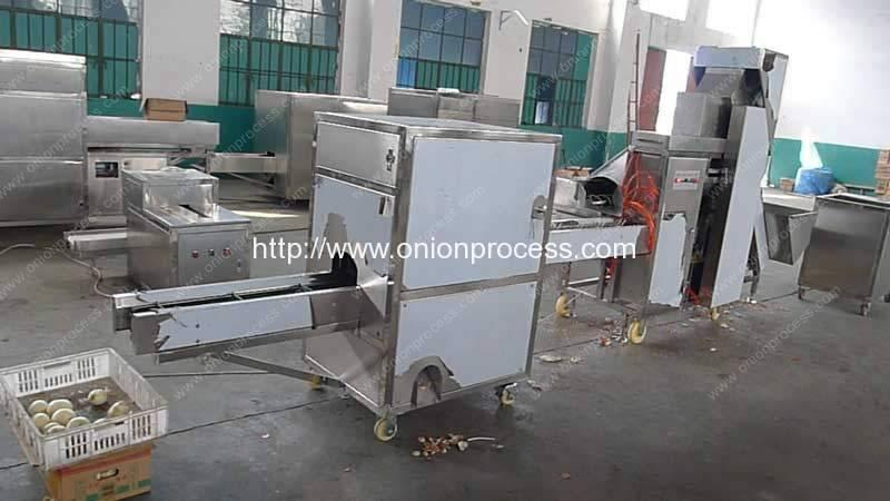 Onion-Peeling-Machine-Root-Cutting-Machine-Manufacture-Factory-Visit