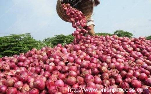 Onions Health Benefits (3)