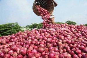 Egypt Garlic Onion Processing Market