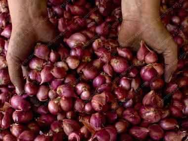 Onion makes them cry again
